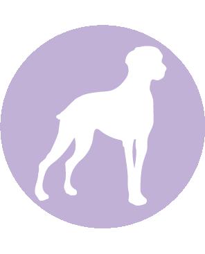 Iconos-Perros-03
